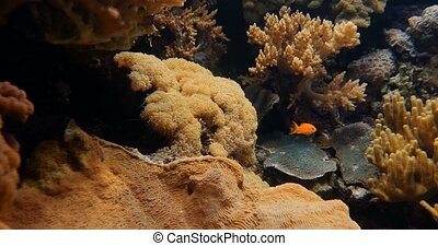 Frogspawn Coral And Other Corals And Anemones