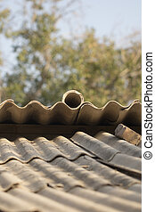 from the old slate roof