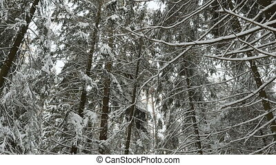 From the tops of trees in the winter forest