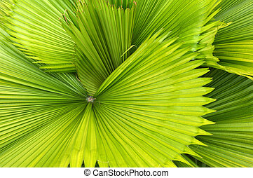 detailed pattern and texture of green palm leaf