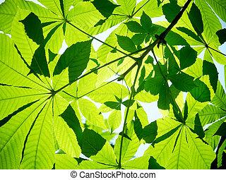 frondes, pousse feuilles