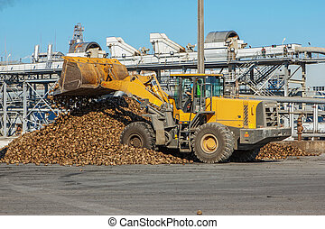 Front-end loader in action on the loading of sugar beet at a sugar factory