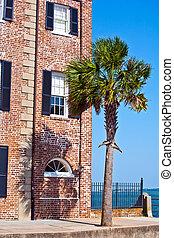 front, od, stary, historyczny, dom, z, dłoń drzewo