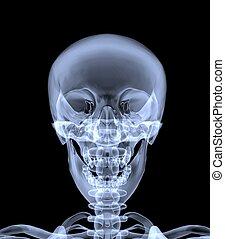 front, röntgenaufnahme, skull., ansicht, menschliche