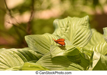 Front view of a Orange Julia Butterfly - Front view of a ...