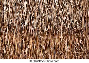 front view of cane dry