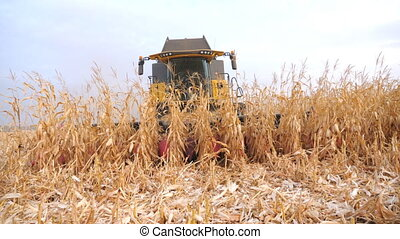 Front view of harvester gathering ripe corn crop in farmland. Combine working on field during harvesting at autumn season. Agronomy or agricultural concept. Slow motion Close up.