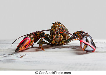 Front view of raw lobster.