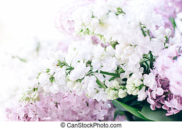 Front view of white and pink lilac flowers.