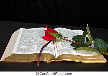 frontal, bible, vue
