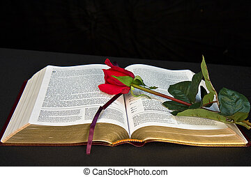 Frontal view of open Bible on Black background and red rose