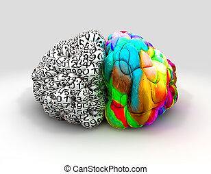 fronte, cervello, concetto, destra, sinistra