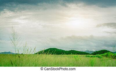 fronte, freddo, secondo, paesaggio., campo, countryside., aria., montagna, erba, grigio, weather., farm., bianco, season., natura, cielo verde, pioggia, prato, piovoso, land., valle, clouds., pulito