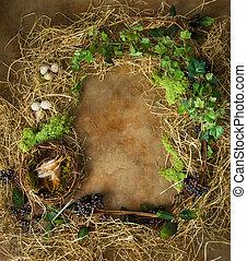 frontera, con, primavera, nido