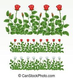 frontera, de, rosas