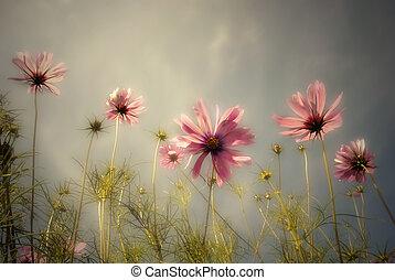 frontera, encima, flores, cielo