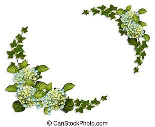 frontera floral, hiedra, y, hydrangea