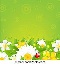 fronteras, flores, pasto o césped, colorido
