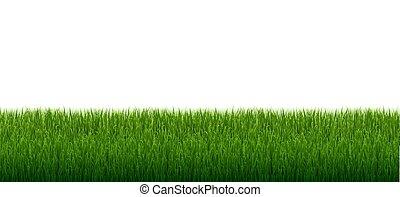 frontière, blanc, arrière-plan vert, isolé, herbe
