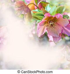 frontière, de, fleurs