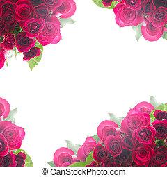 frontière, de, roses rouges