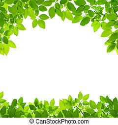 frontière, feuilles, blanc vert, fond