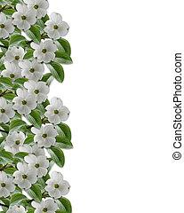 frontière florale, cornouiller, fleurs