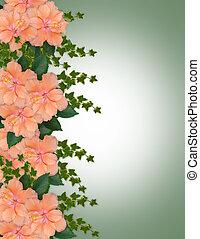 frontière florale, hibiscus, pêche