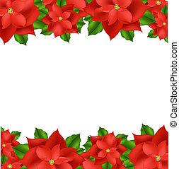 frontière, rouges, poinsettia
