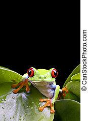 frosch, auf, pflanze, freigestellt, schwarz