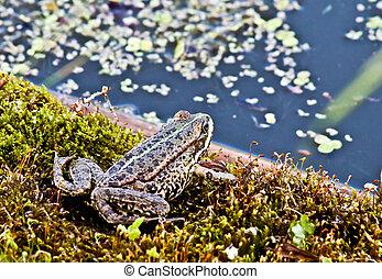 frosch, in, der, grass.