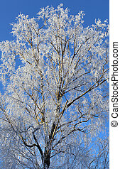 Frost and snow covered tree