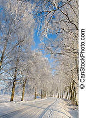 Country roud with frost covered birch tree allay in winter