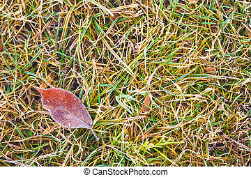 Frost Covered Leaf on a Grassy Background