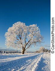 Frost covered tree in winter with natural blue sky