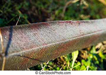 Frost covered wooden beam, outdoors