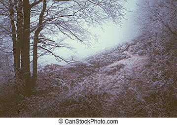 Frost on beech trees in the forest
