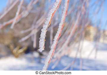 Frost on branch of tree