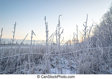 Frost on grass on a field