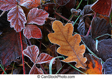 Frost on leaves in cold autumn dawn