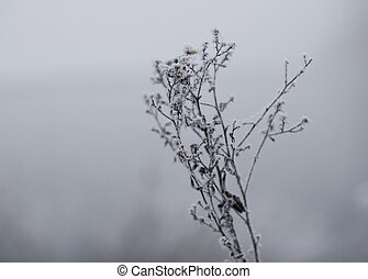 frost on the branches of a bush in winter
