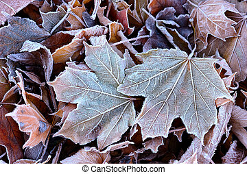 The first autumn frost on the fallen leaves in the park.