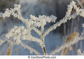 Frost on the grass, close-up