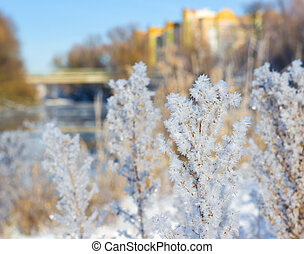 Frost on the grass in sunny winter day