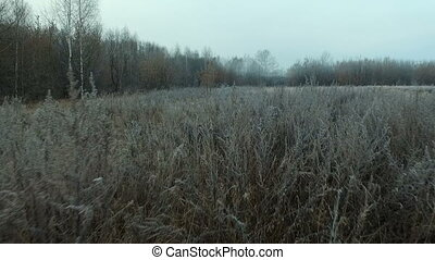 Frost on the grass in the autumn forest