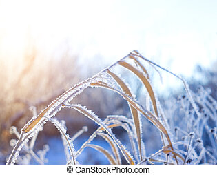 Frost on the grass in winter day
