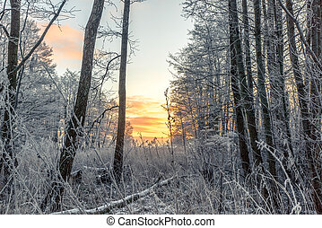Frost on trees in the forest