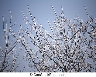 Frost On Winter Tree