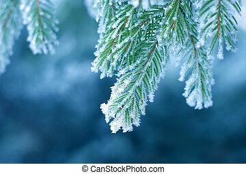 frost, på, fura