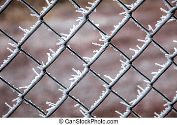 Frost Patterns on Chain Link